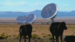 A satellite dish sits in a field with cattle. Stock Footage
