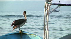 A pelican stands on the bow of a rowboat floating in water. - stock footage