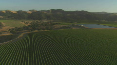 Helicopter aerial of a vineyard in the Santa Maria Valley, Stock Footage