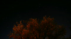 Time lapse of stars moving across the sky with a tree in Stock Footage