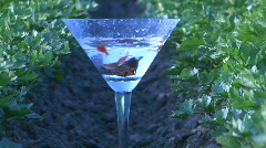 Fish swim in a martini glass. Stock Footage