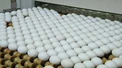 Eggs move along a conveyor belt. Stock Footage