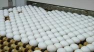 Stock Video Footage of Eggs move along a conveyor belt.