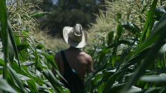 A farmer walks through a corn field. Stock Footage