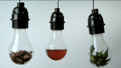 Light bulbs containing plant matter, folded money and red liquid hang in a row Stock Footage