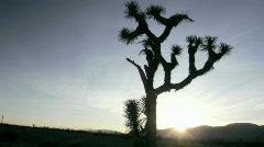 A cactus grows in the desert. Stock Footage