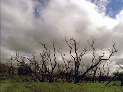 Stock Video Footage of Craggy Trees 640x480