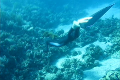 Beautiful freediver girl swims along coral reef Stock Footage