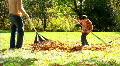 Raking Leaves 359 Footage