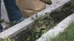Gardening. Clearing flowerbed. 2 shots. Stock Footage