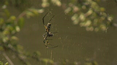 South AFrica Spider 00 Stock Footage