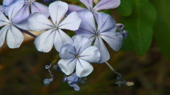Rainfall on Flower, Leaves, and Lake Sequence Stock Footage