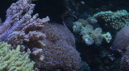 Stock Video Footage of Coral reef