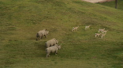 Rhinos Running Toward Gazelles Sequence Stock Footage