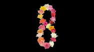 Stock Video Footage of Montage opening rainbow roses number 8 shape alpha matte 8n
