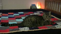 Kissa kirjava viltti näyttää pois saa hätkähdytti Arkistovideo