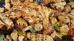 rotatory sea-shells loop - stock footage