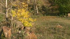 Mellow autumn. Stock Footage