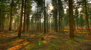 Stock Video Footage of Moving forest shadows hdr time lapse