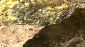 Hot Spring In The Soda Dam Of The Jemez Mountains Footage
