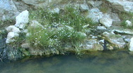Hot Spring In The Soda Dam Of The Jemez Mountains Stock Footage