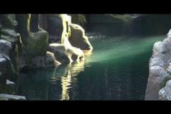 Rockpool water scene Stock Footage