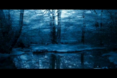 Dark winter forest snow scene Stock Footage