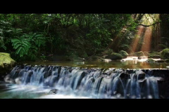 river waterfall with tree landscape - stock footage