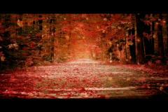 autum fall golden scene - stock footage