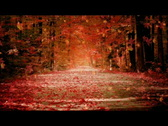 Stock Video Footage of autum fall golden scene