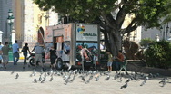 Stock Video Footage of Mazatlan street vendor pigeons P HD 4763