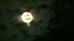 Full Moon and Willow Tree Stock Footage