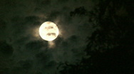 Stock Video Footage of Full Moon and Willow Tree