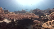 Reef scenic Stock Footage