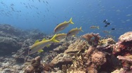 Reef scenic and fish Stock Footage
