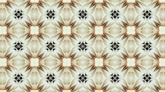 Organic kaleidoscope from blooming white cactus 8a - stock footage