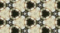 Organic kaleidoscope from blooming white cactus 8b - stock footage