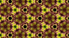 Organic kaleidoscope from blooming red dahlia flower 13a - stock footage