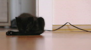 HD1080p Black little cat playing Stock Footage