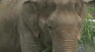 Pattaya elephants Stock Footage