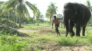 Pattaya elephants Stock Footage
