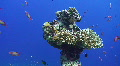 Coral growth on sunken anchor Footage