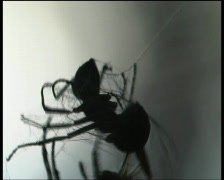 Ant and spider - stock footage