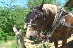 2 Saddled Horses Resting - stock footage