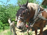 Stock Video Footage of 2 Saddled Horses Resting