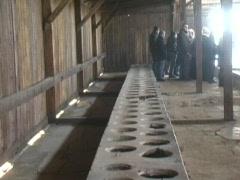 Auschwitz Prisoner Latrines Stock Footage