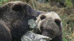 The bear caress Stock Footage