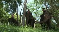 Mahout, Pattaya elephants Stock Footage