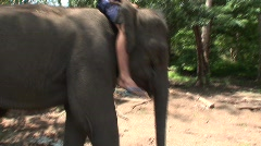 Mahout, Pattaya elephants Stock Footage