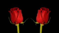 Kukka grow05 Arkistovideo